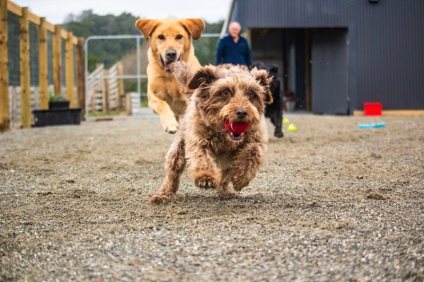 New River Kennels