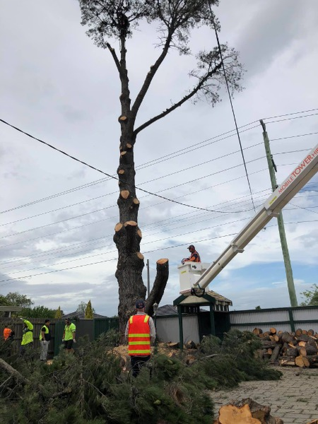 Fast & Affordable Tree Services