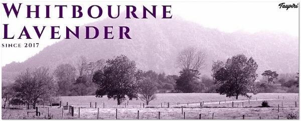 Whitbourne Lavender